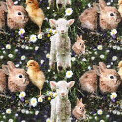 Jersey - Kylling, lam og kanin